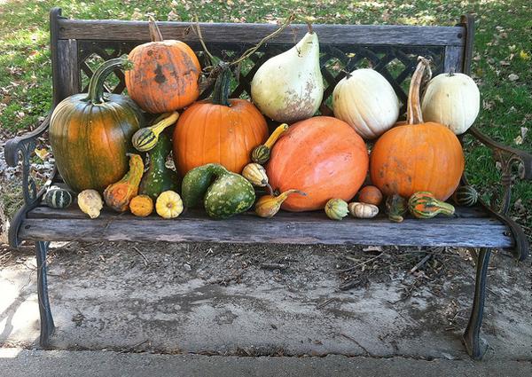 pumpkins_Simple THINGS