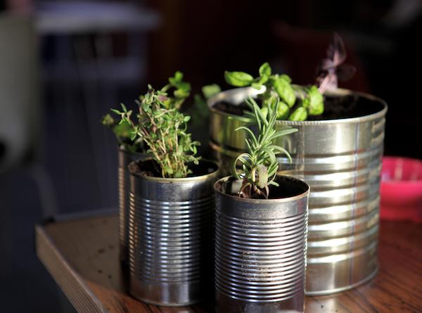herbs alice hendy