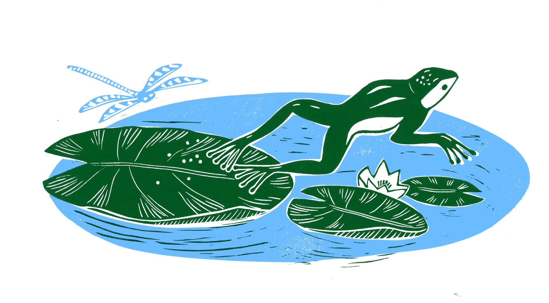Illustration:    Zuza Misko