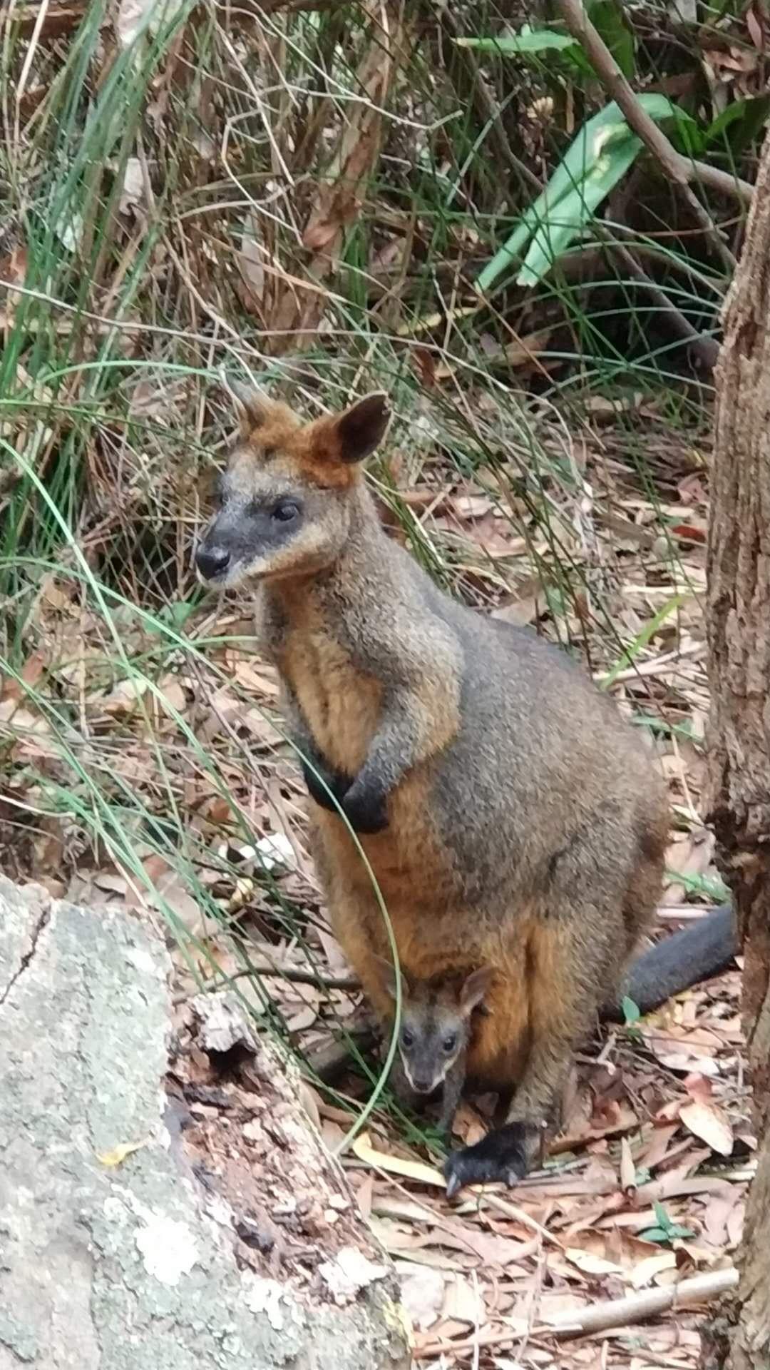 "Photo by Susie, ""Royal National Park, Australia"""