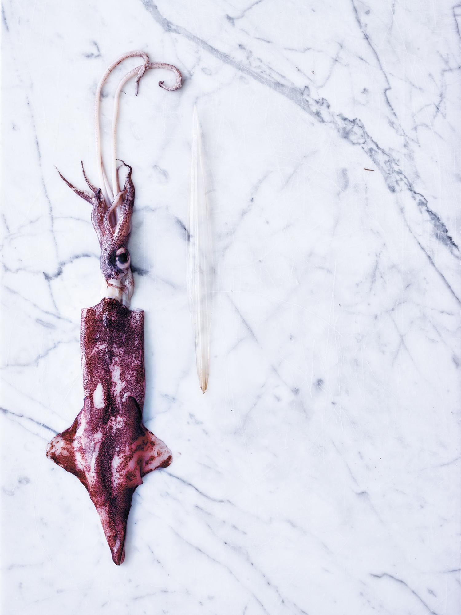 Ryggraden er trukket forsiktig ut av blekkspruten.