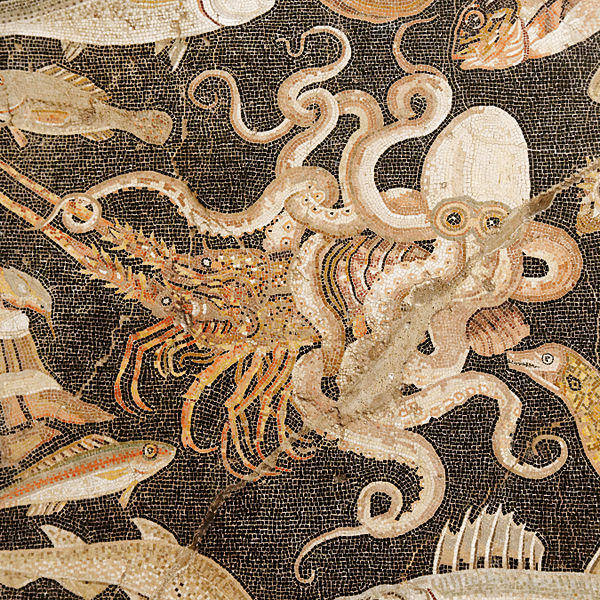 Pompeii octopus.jpg