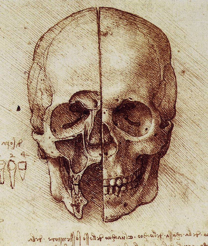 A drawing by Leonardo da Vinci, done in Sepia ink