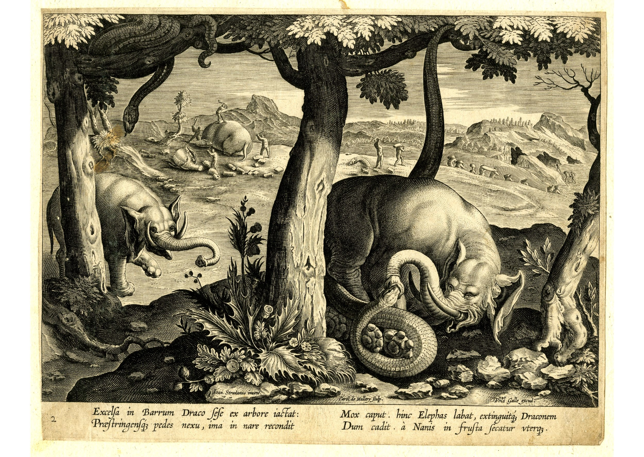 A Dragon and an Elephant Fighting to the Death