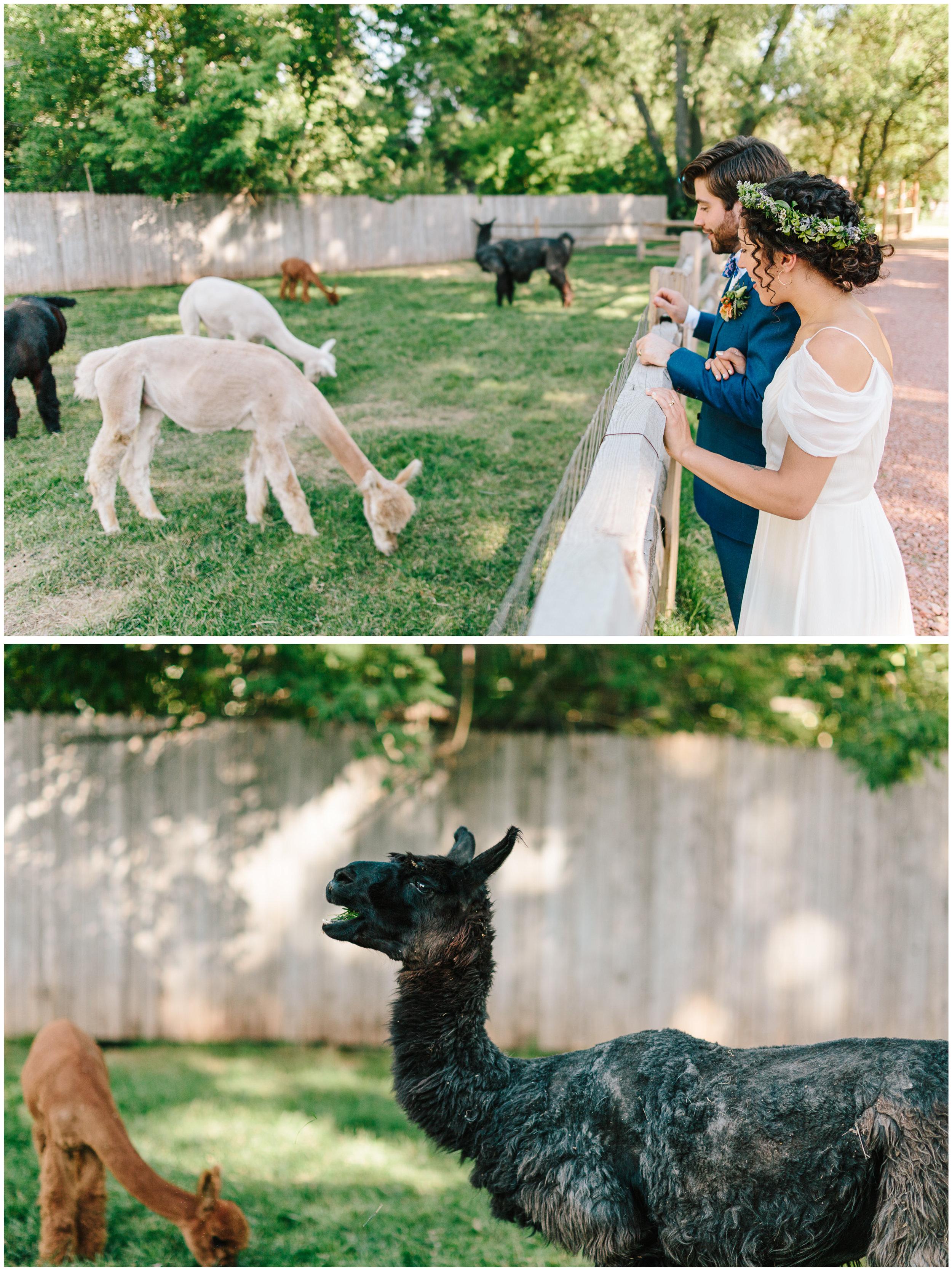 lyons_colorado_wedding_47.jpg