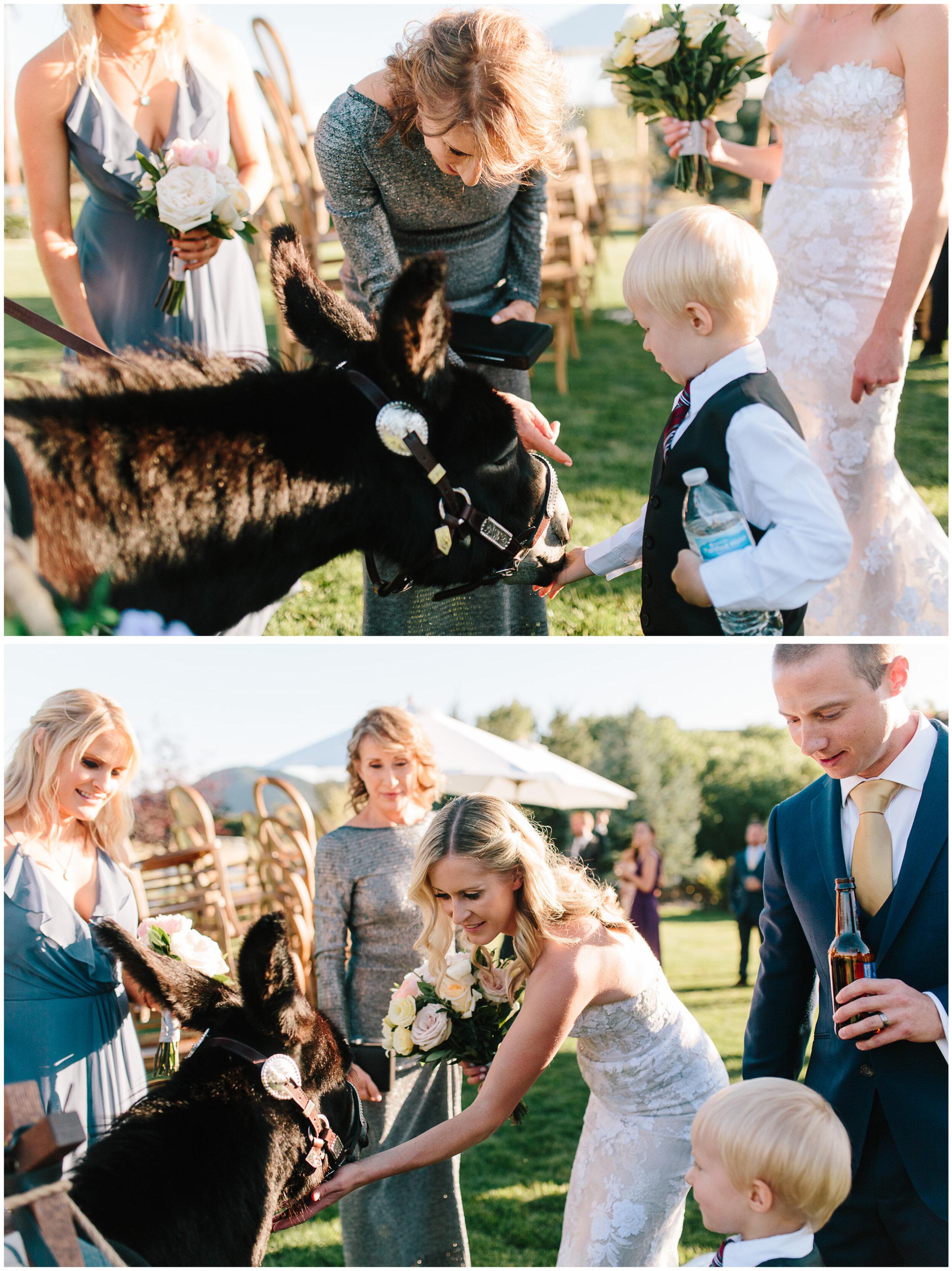 larkspur_colorado_wedding_49.jpg