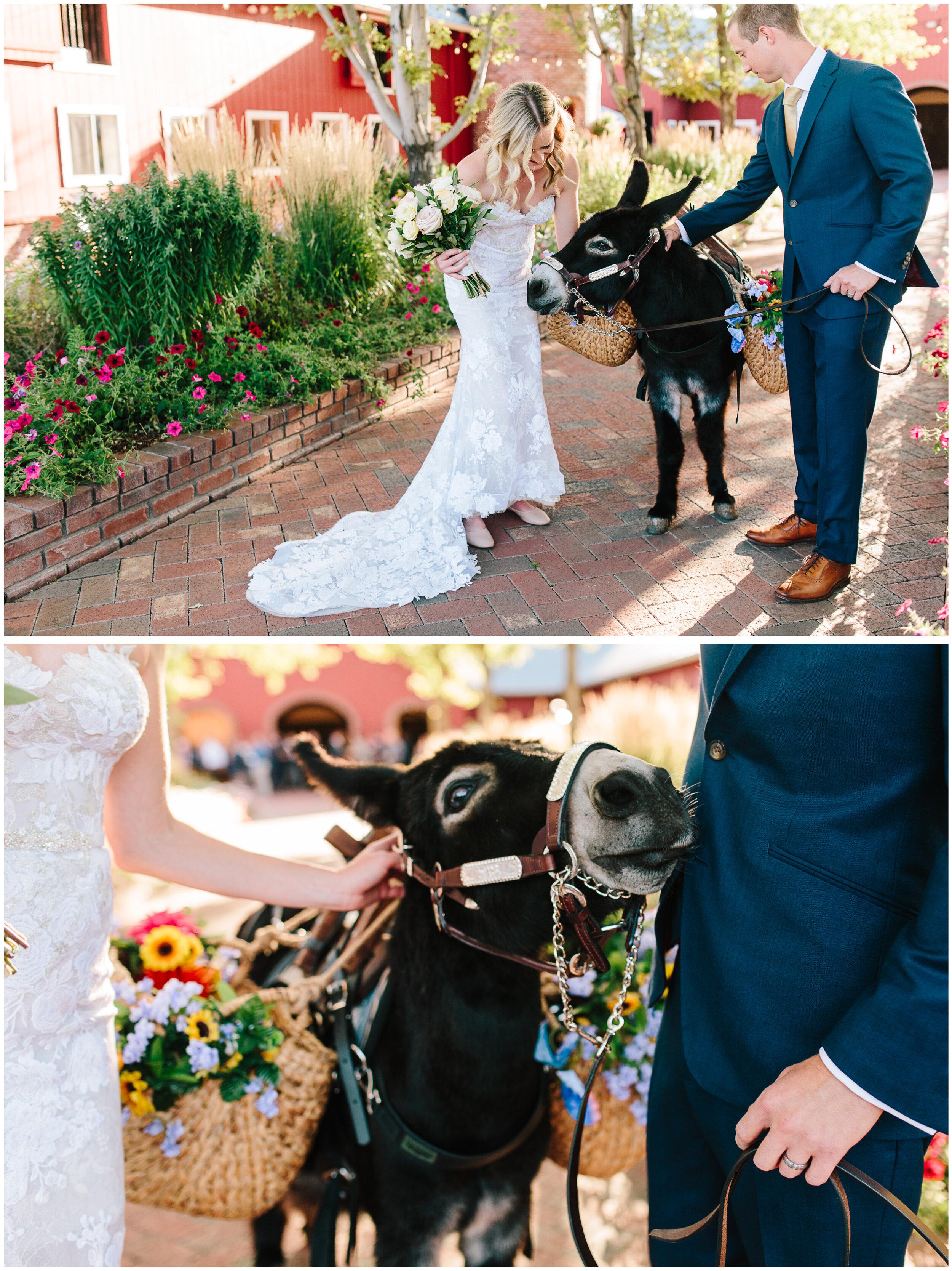 larkspur_colorado_wedding_52.jpg