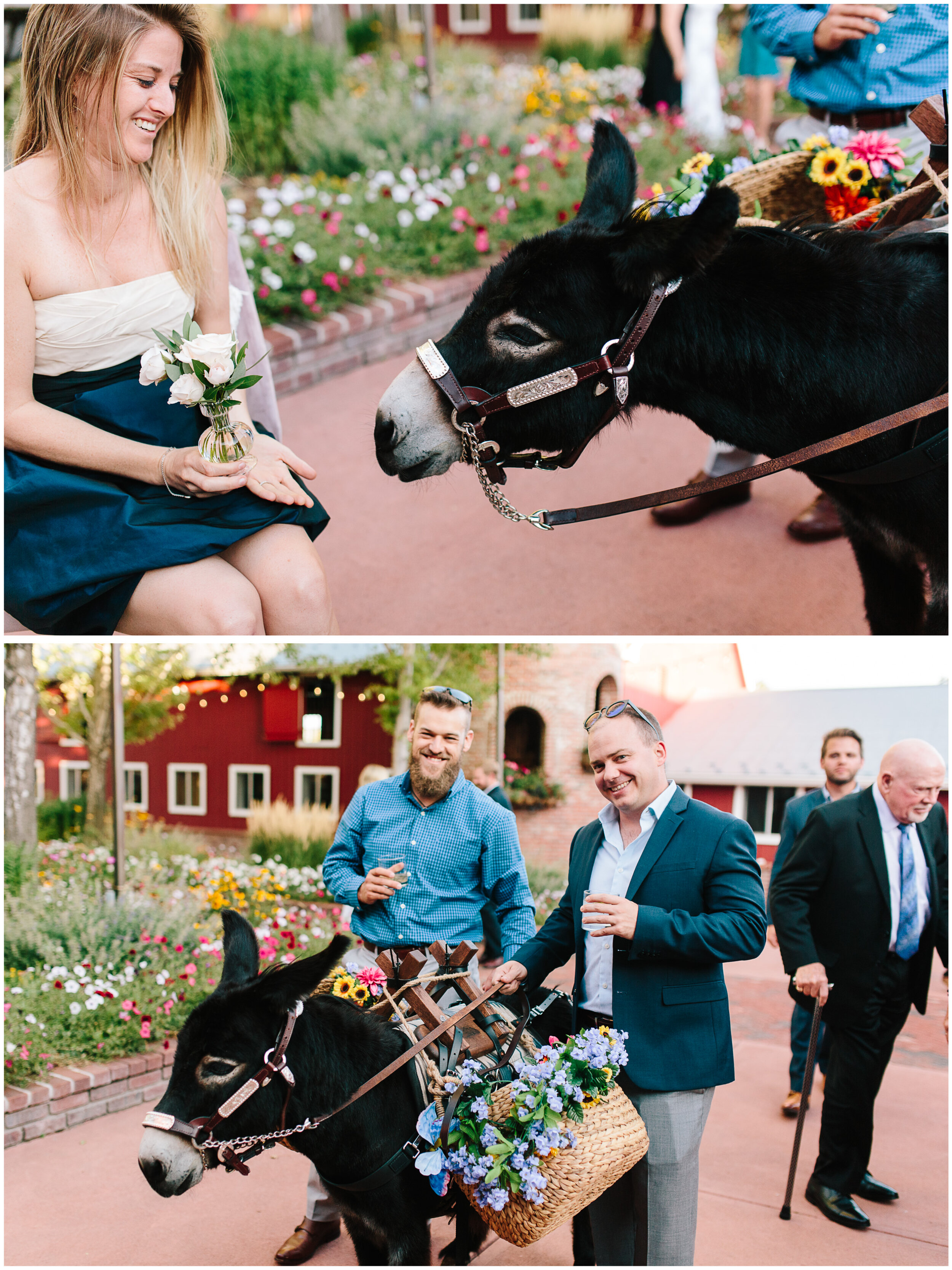 larkspur_colorado_wedding_58.jpg