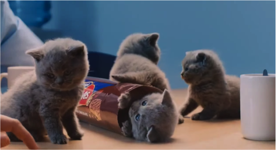 kittens-in-biscuit-pack.png