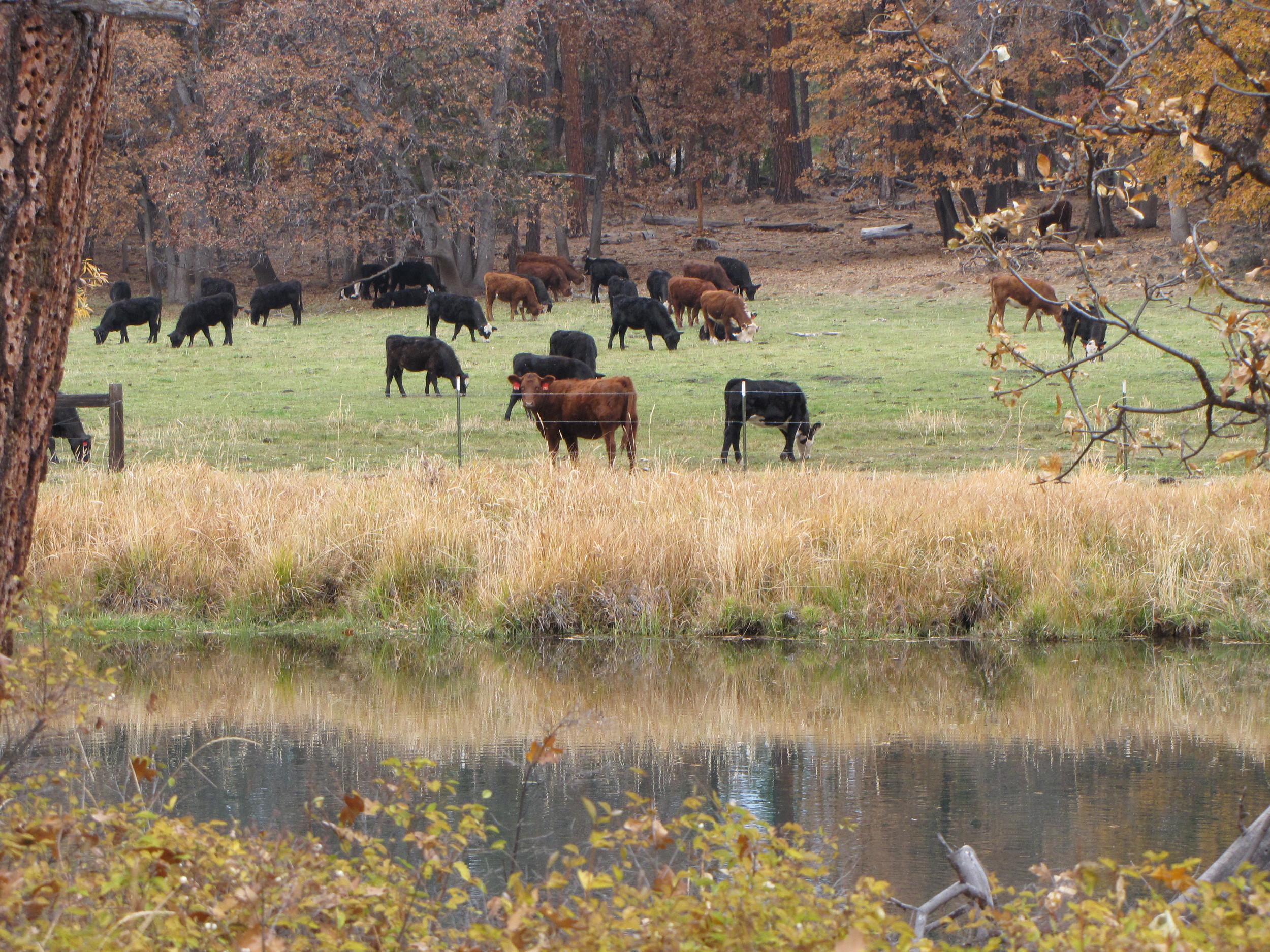 Fall River Ranch
