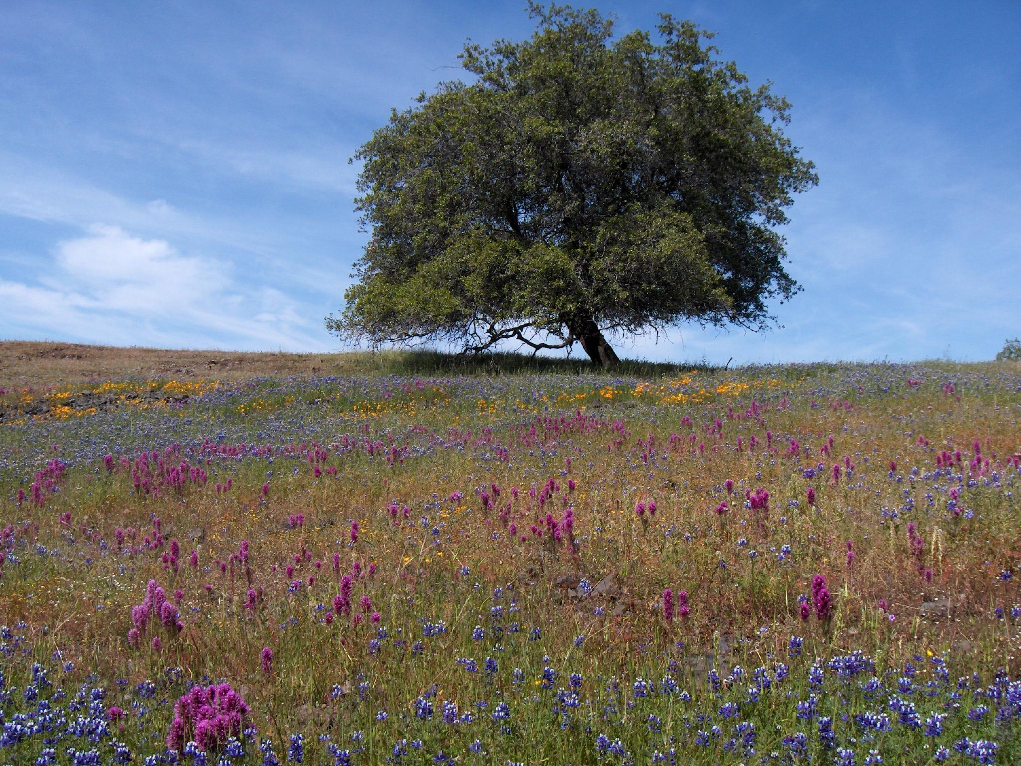 Spring by Jay & Terri Thesken