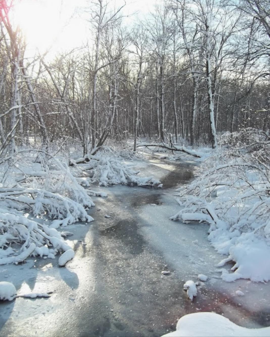 Auburn Lake Creek in Campbellsport, WI