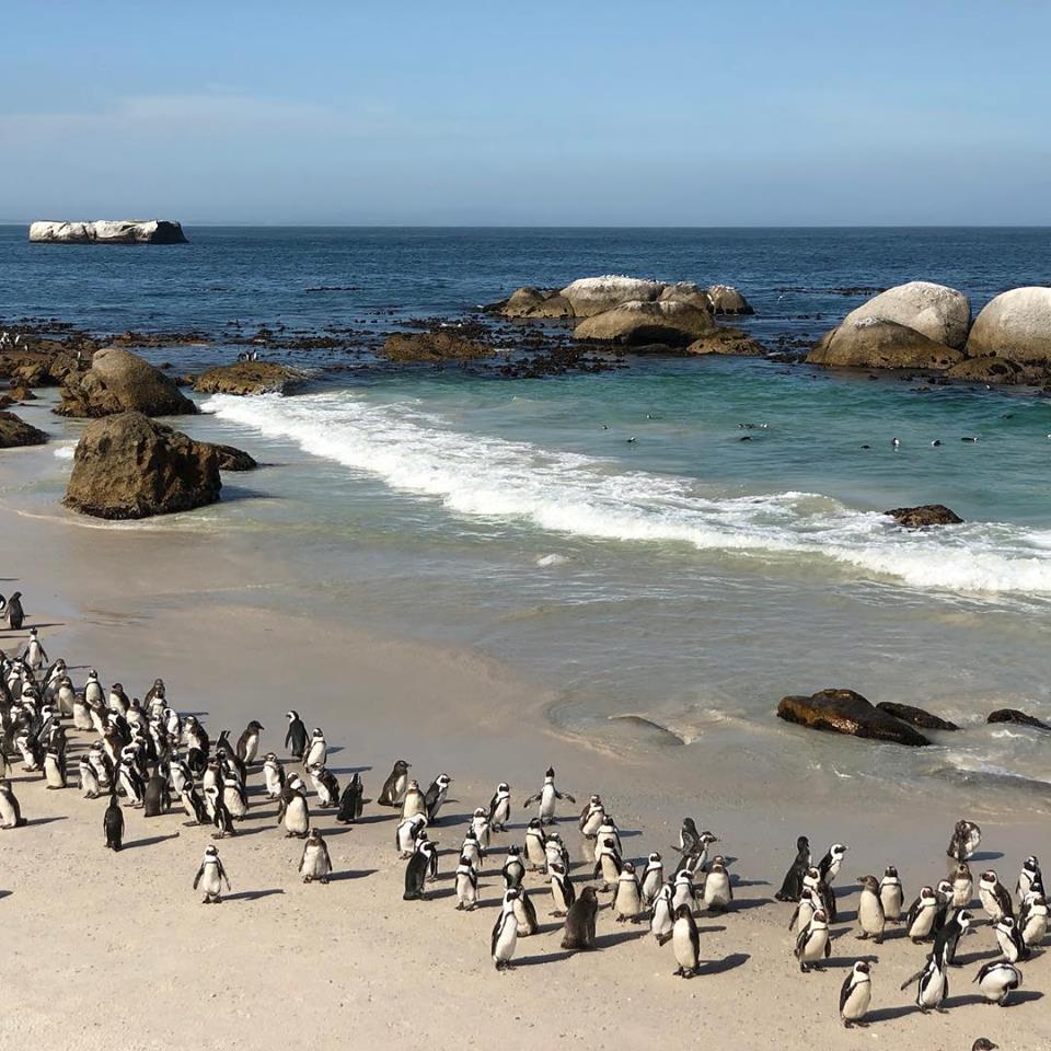 pingviner.jpg