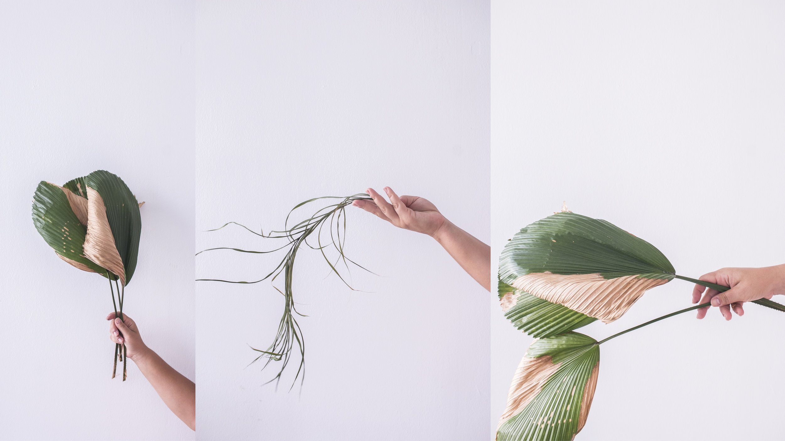 This plant life by Jette