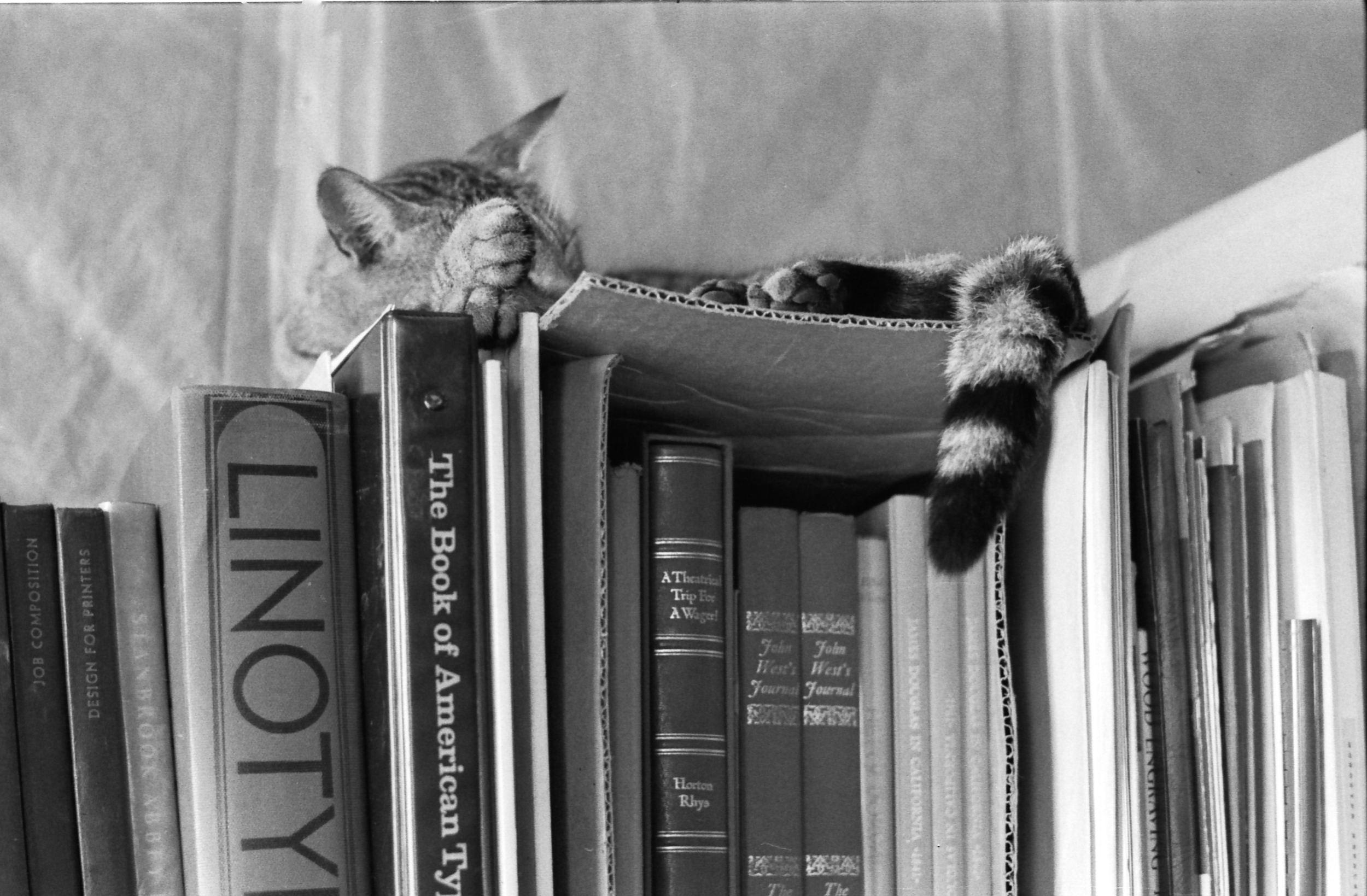 Above: A comfortable spot.  Photo: HH Johnston Collection, courtesy Sean Johnston
