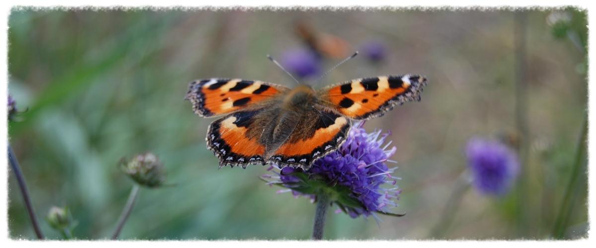 vlinder1200x500.jpg