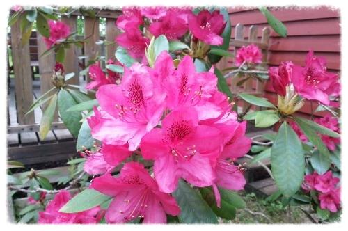 roze bloemen MB.jpg