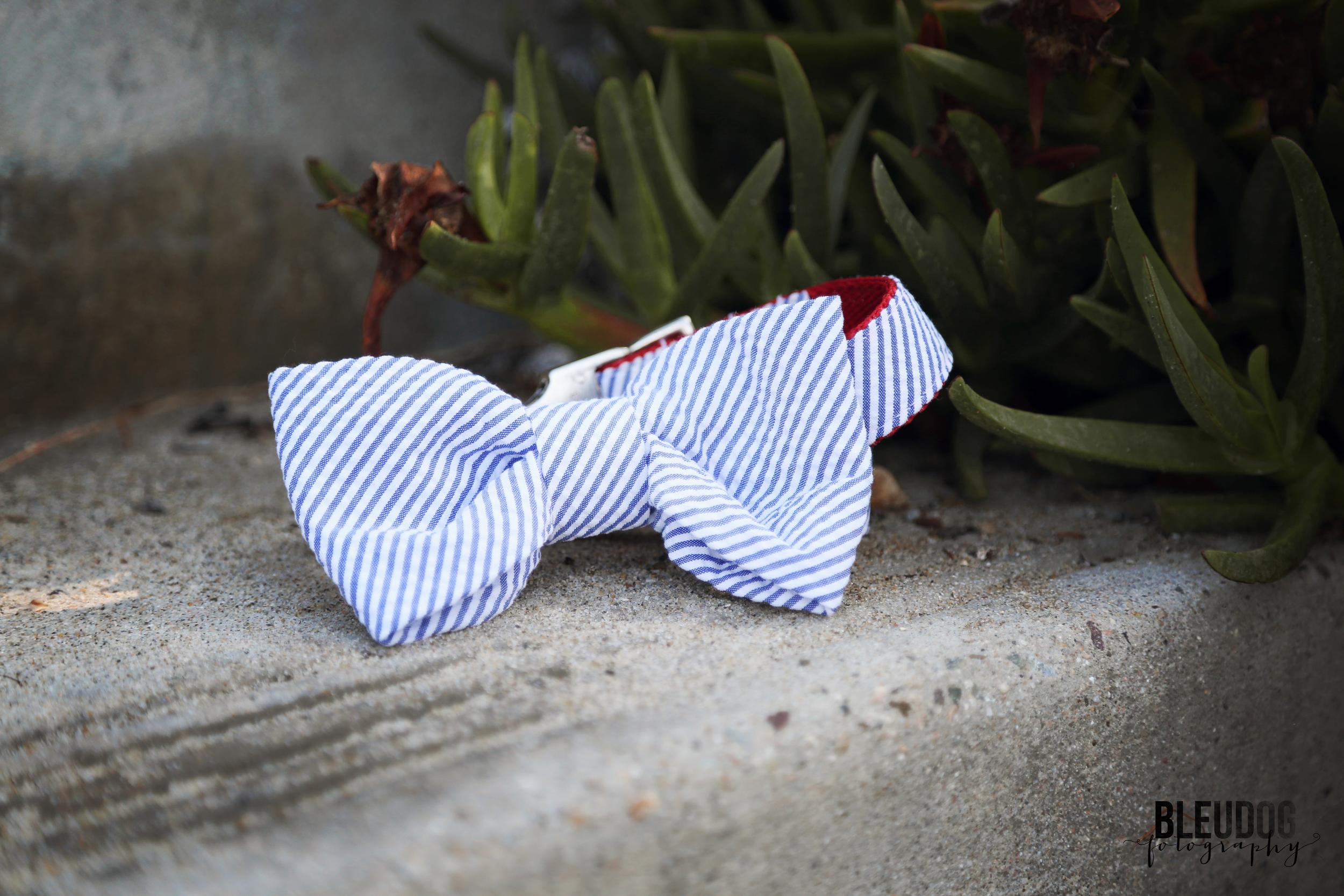Doggie Bow Tie from Crew La La // The Overwhelmed Bride Wedding Blog + Southern California Wedding Planner