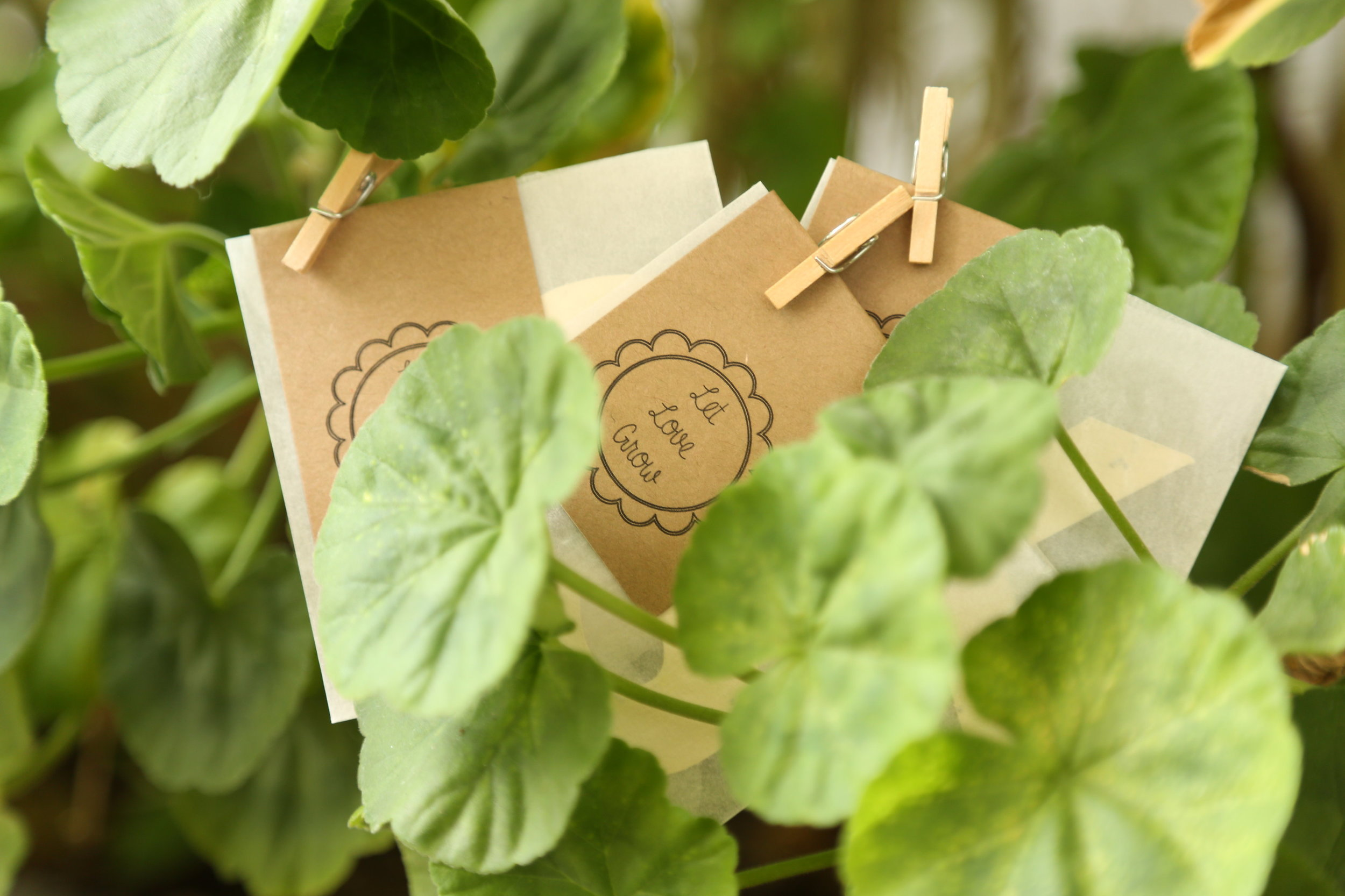 plantable wedding favor seeds
