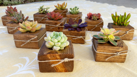unique wedding favor ideas - succulent wedding favors