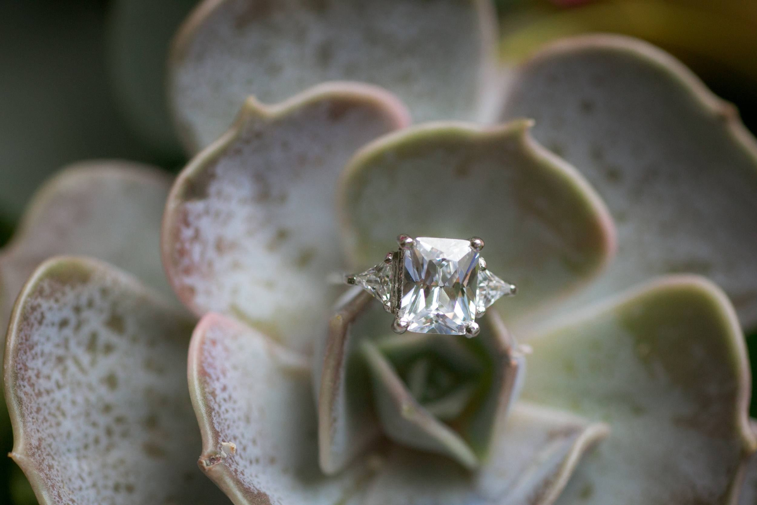 3 Stone Engagement Ring - Colchester, Connecticut Wedding Photographer
