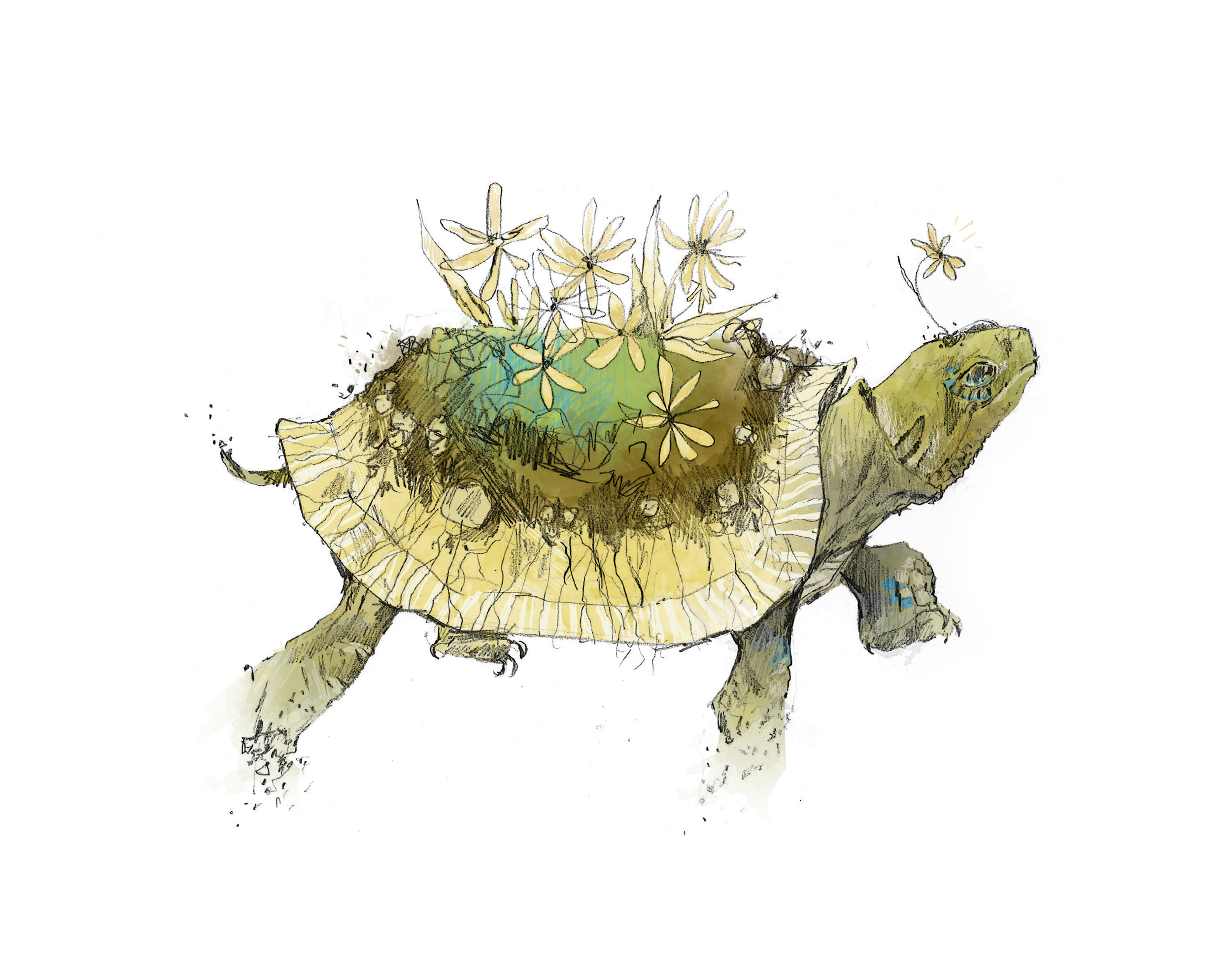 Emily Krueger_Garden Turtle.jpg