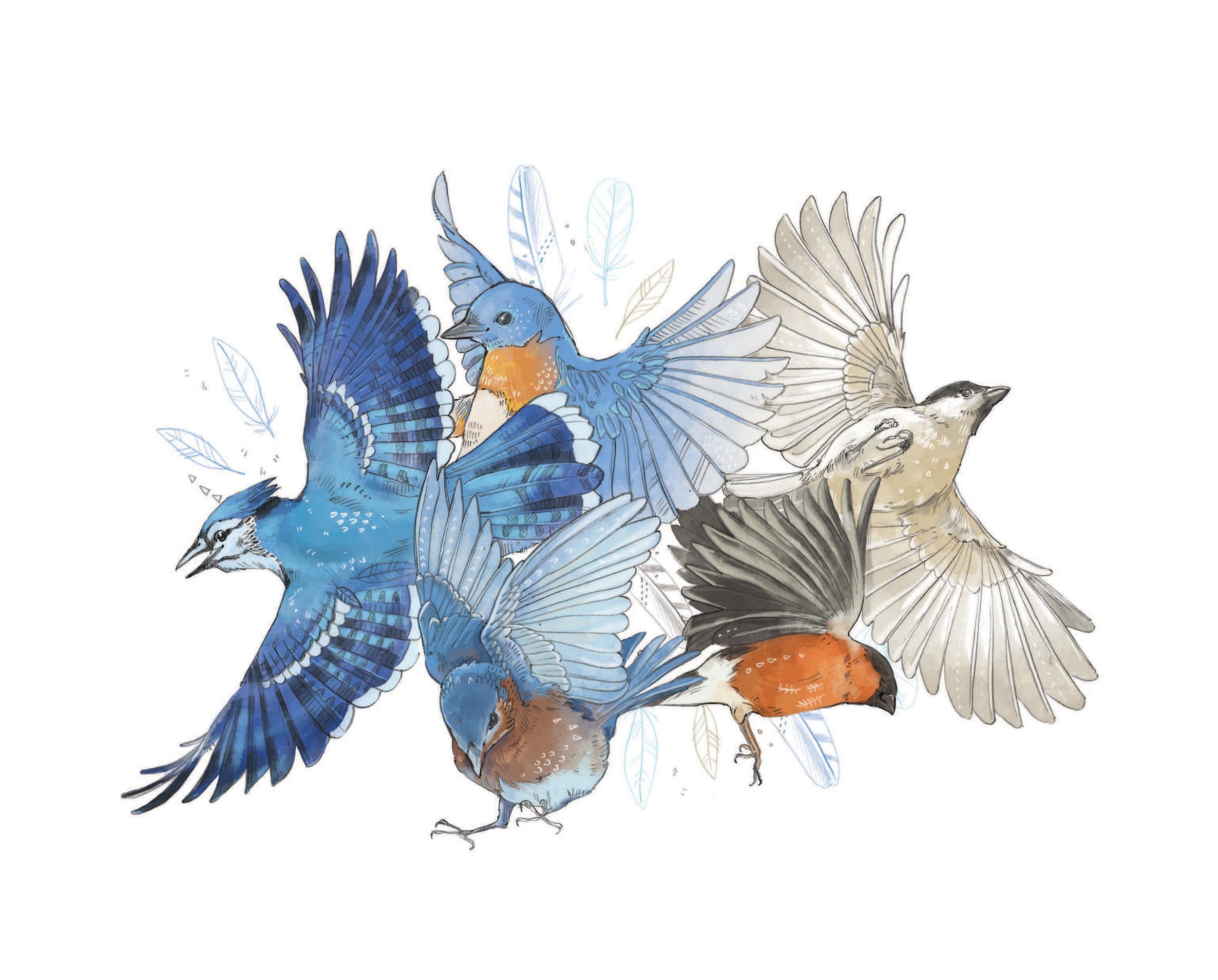 10x8 Print_Birds BLEED.jpg