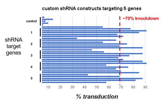Percentage knockdown of 36 shRNA constructs targeting 6 genes (including control). On average >70% of our designed constructs transduce at a 70% or greater expression and transcript knockdown as determined by Q-PCR.