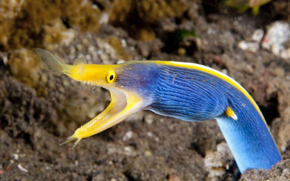 moray-eel-ss.jpg.1000x0_q80_crop-smart.jpg