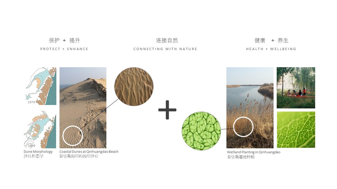 Morphis Qinhuangdao 1-2.JPG