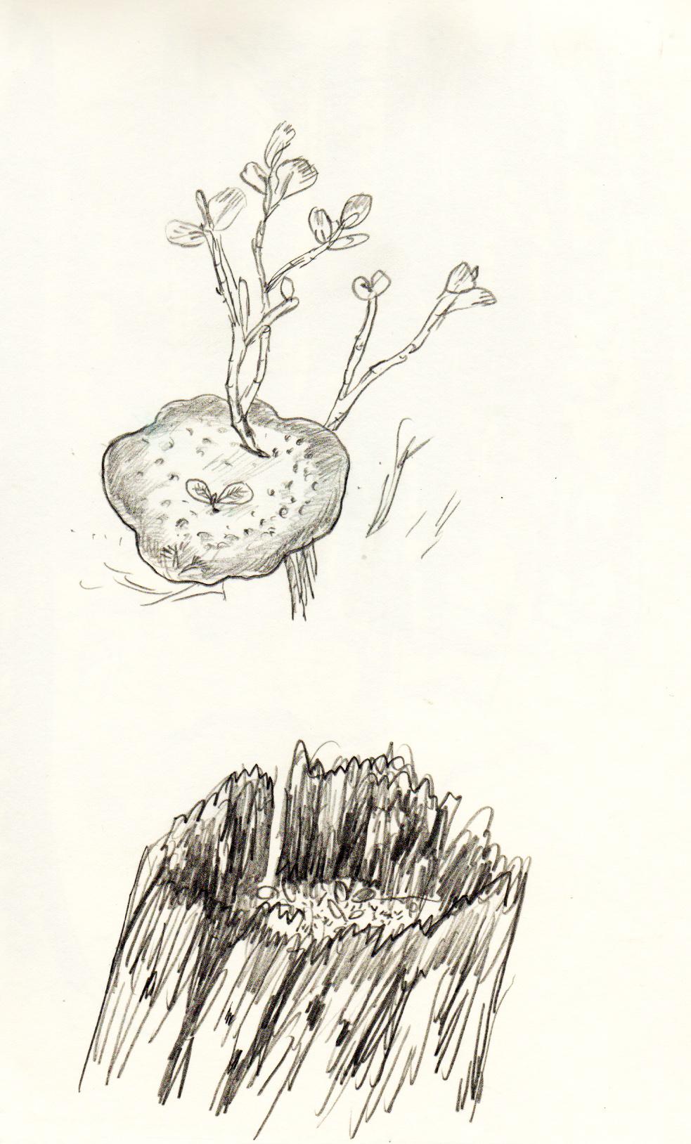 champignon ete 2011.jpeg