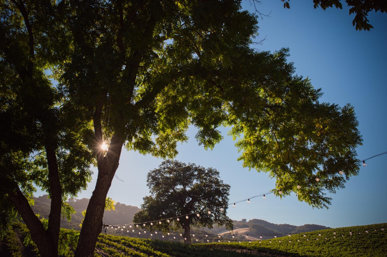 vinyardwedding2.jpg