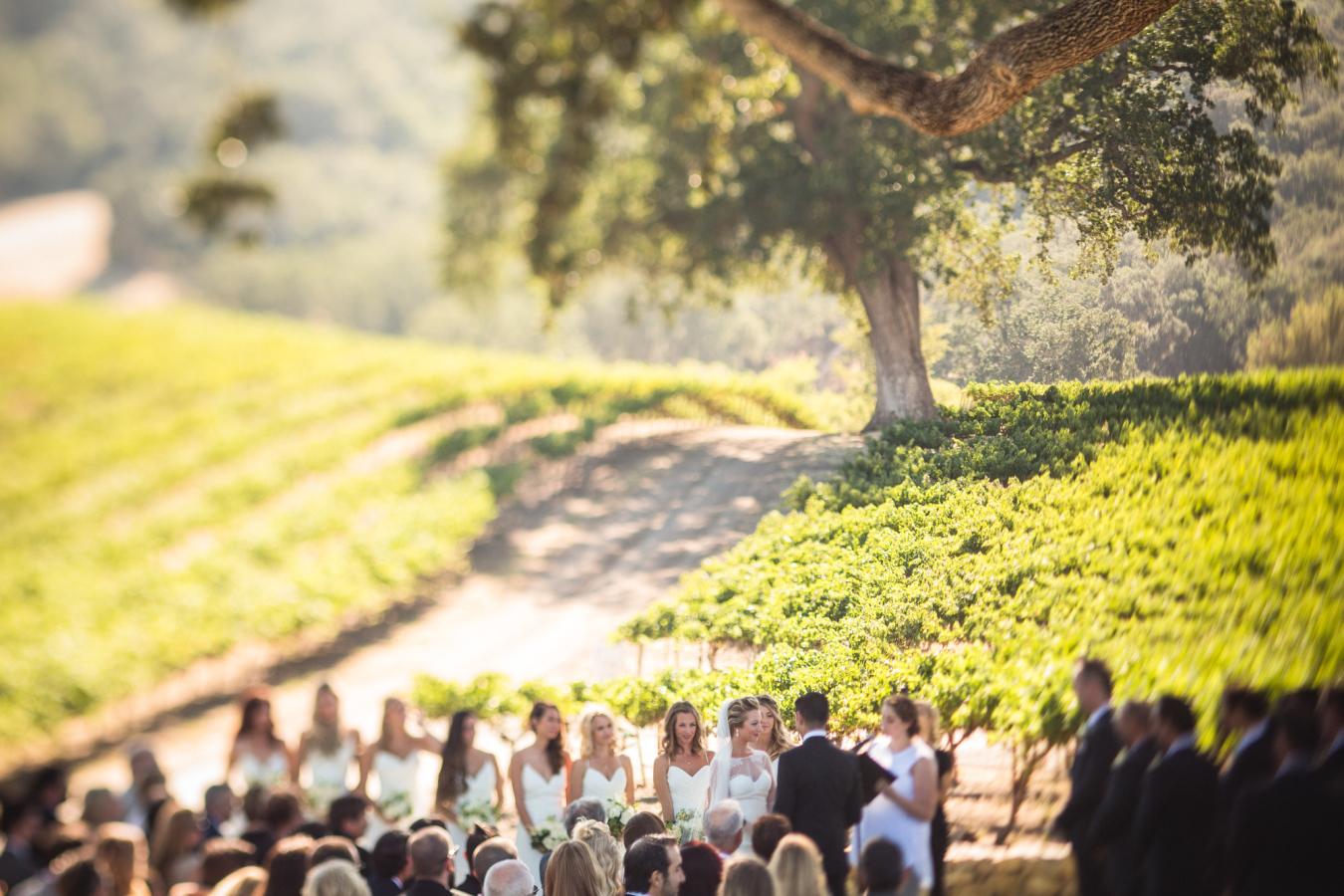 vinyardwedding5.jpg