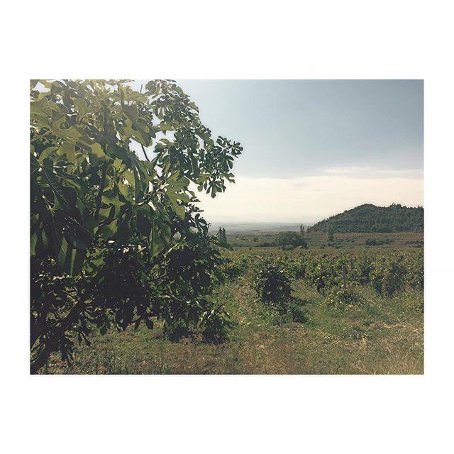 La Rioja y el otoño 🍁
