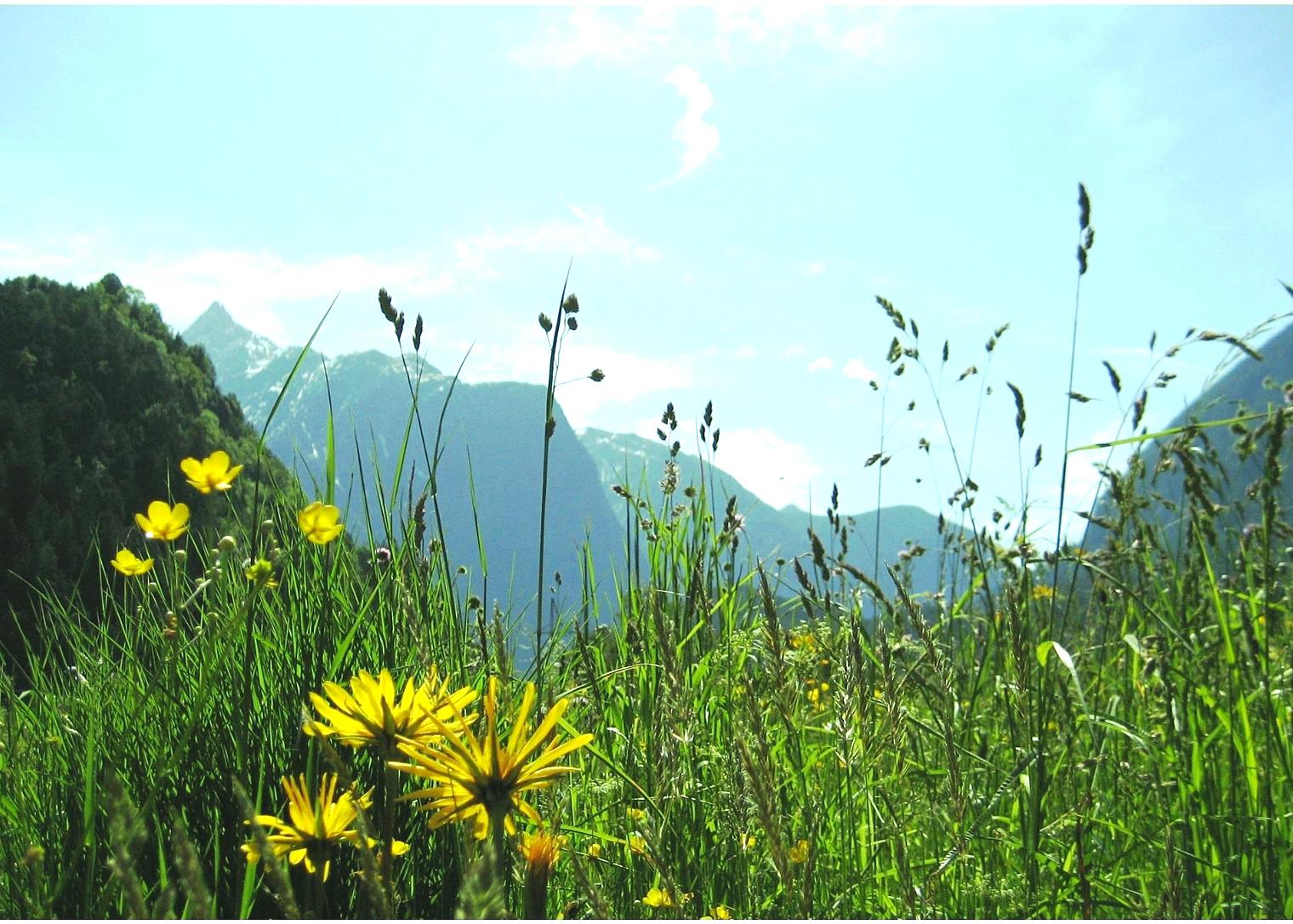 Sommerpanorama 2_Wiese mit Acherkogel.jpg