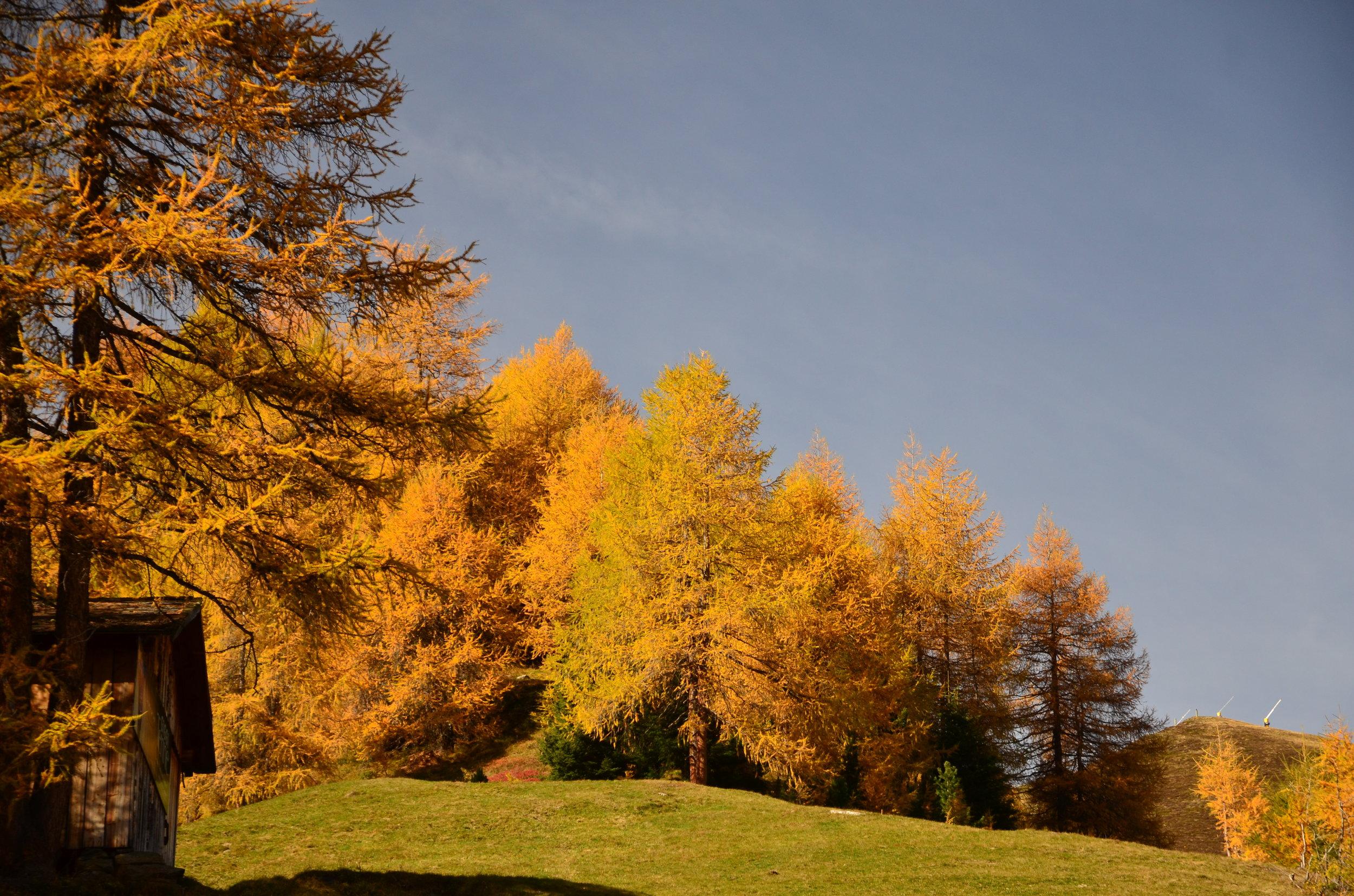 Ötztal_Chalet_Tirol_Herbstlandschaft_Bäume.JPG