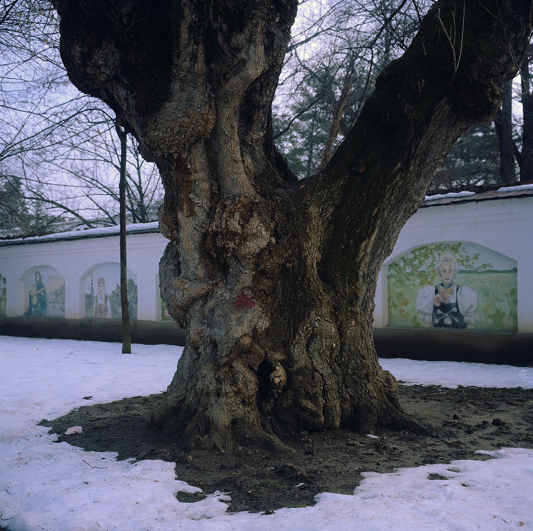 Annemarie_Bala_Europa_Park_tree.jpg