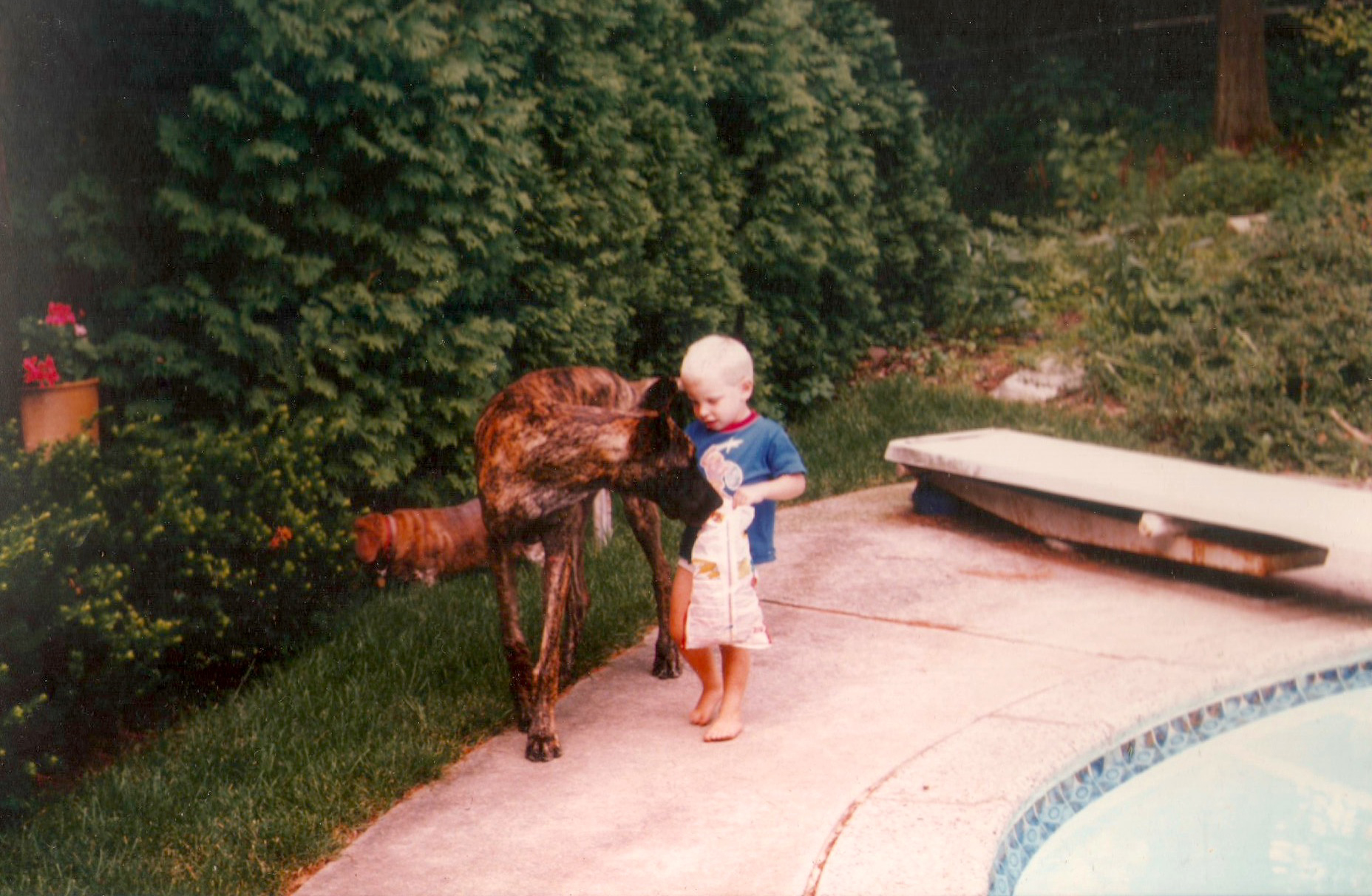 Sir Lancelot the Great Dane and I circa 1987