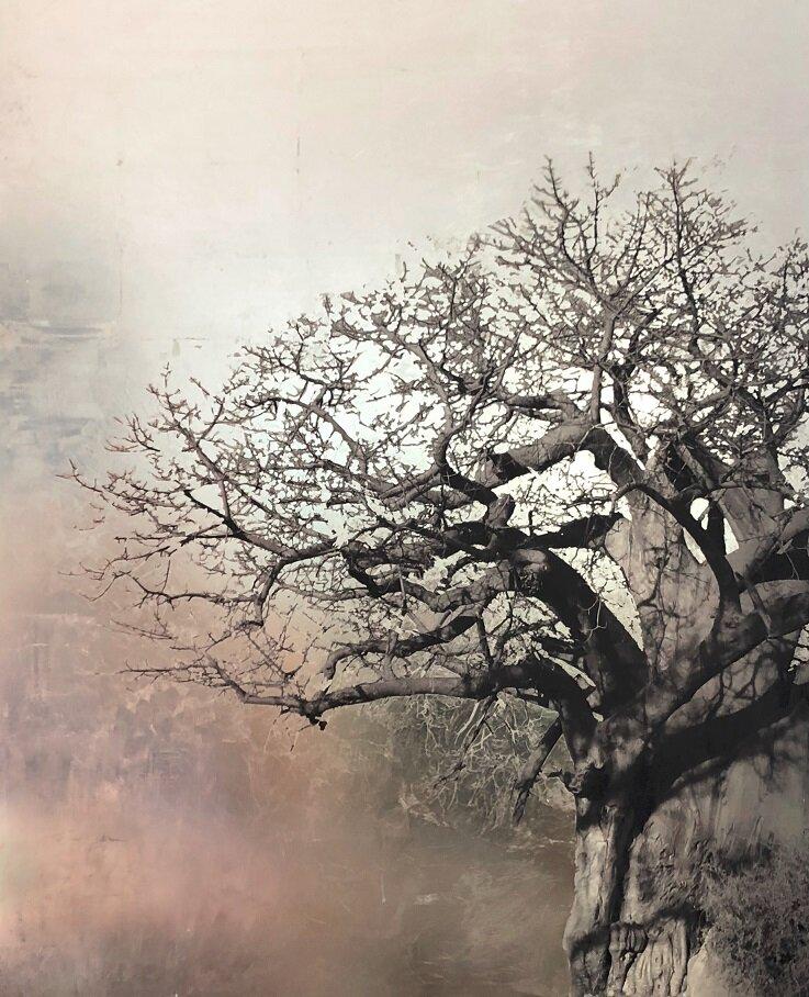 Carolina-Piteira-Baobab.jpg