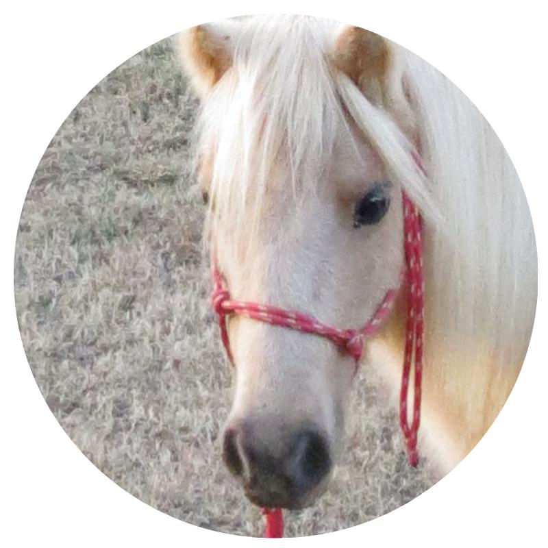 Horse 3 copy.png
