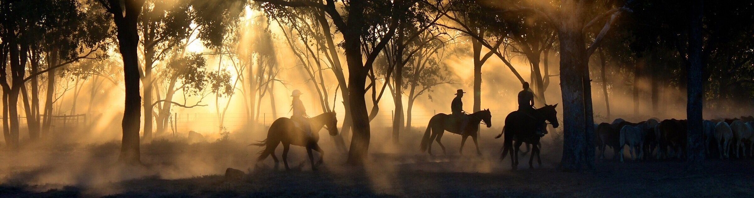 cowboys-1826527.jpg