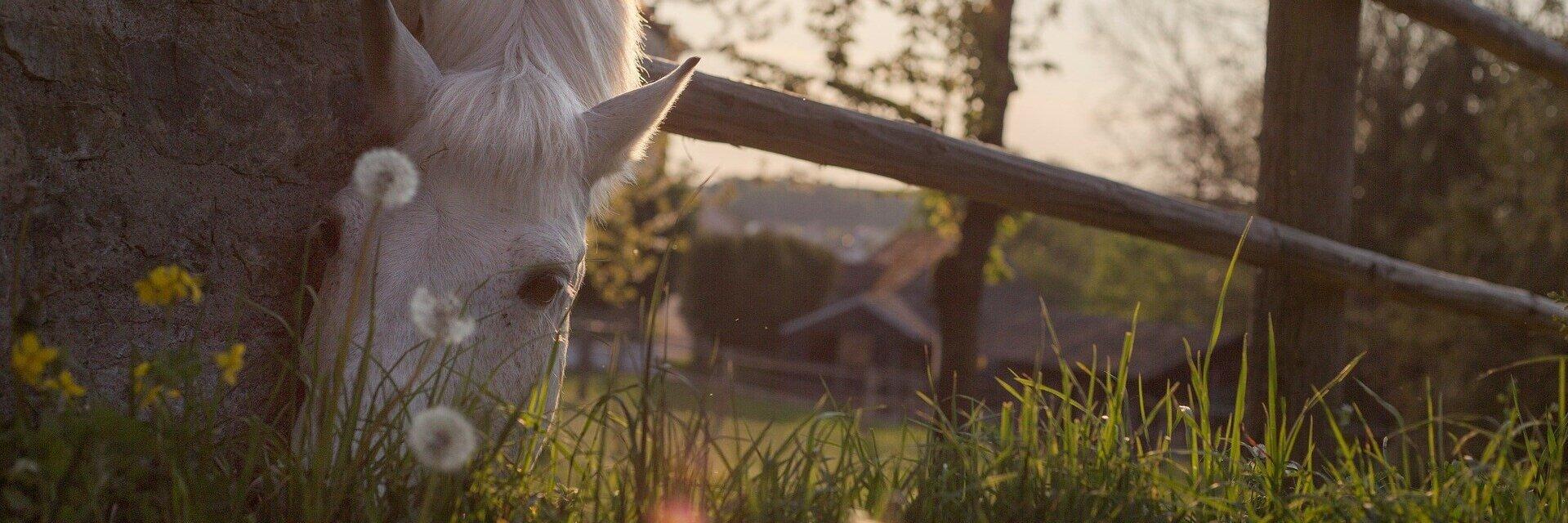 horse-331866_1920.jpg