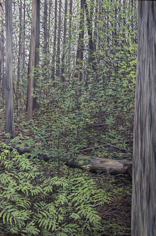 Passage: Cedar Swamp Trail, 2015 (SOLD)