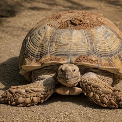 Copy of Tortoise