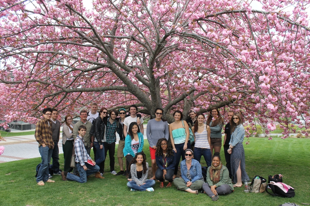Environmental Humanities students enjoying a final session, reading and writing haiku, under Stony Brook's cherry blossoms