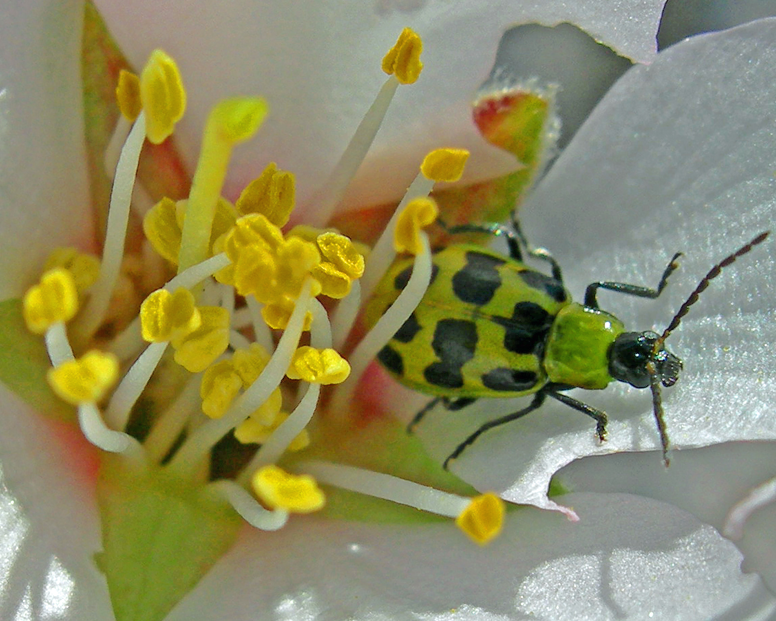 pest on a flower