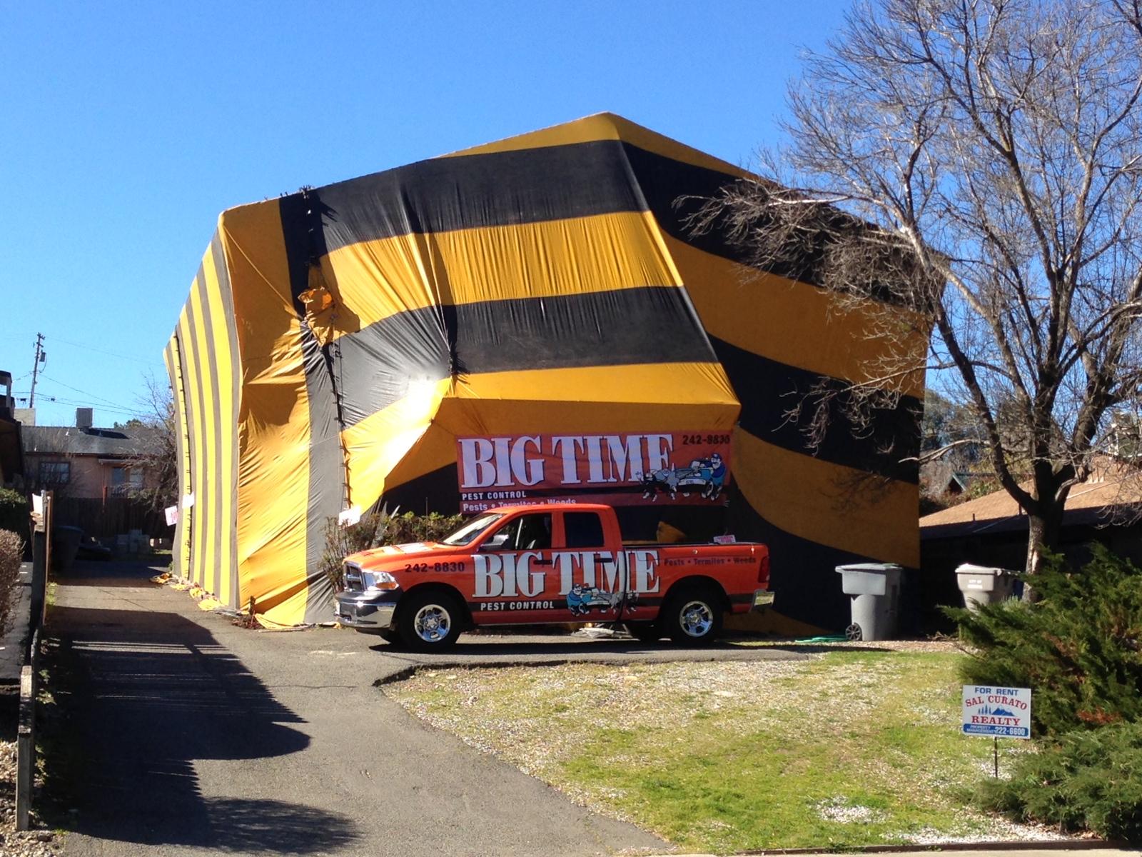 Termite Bomb House