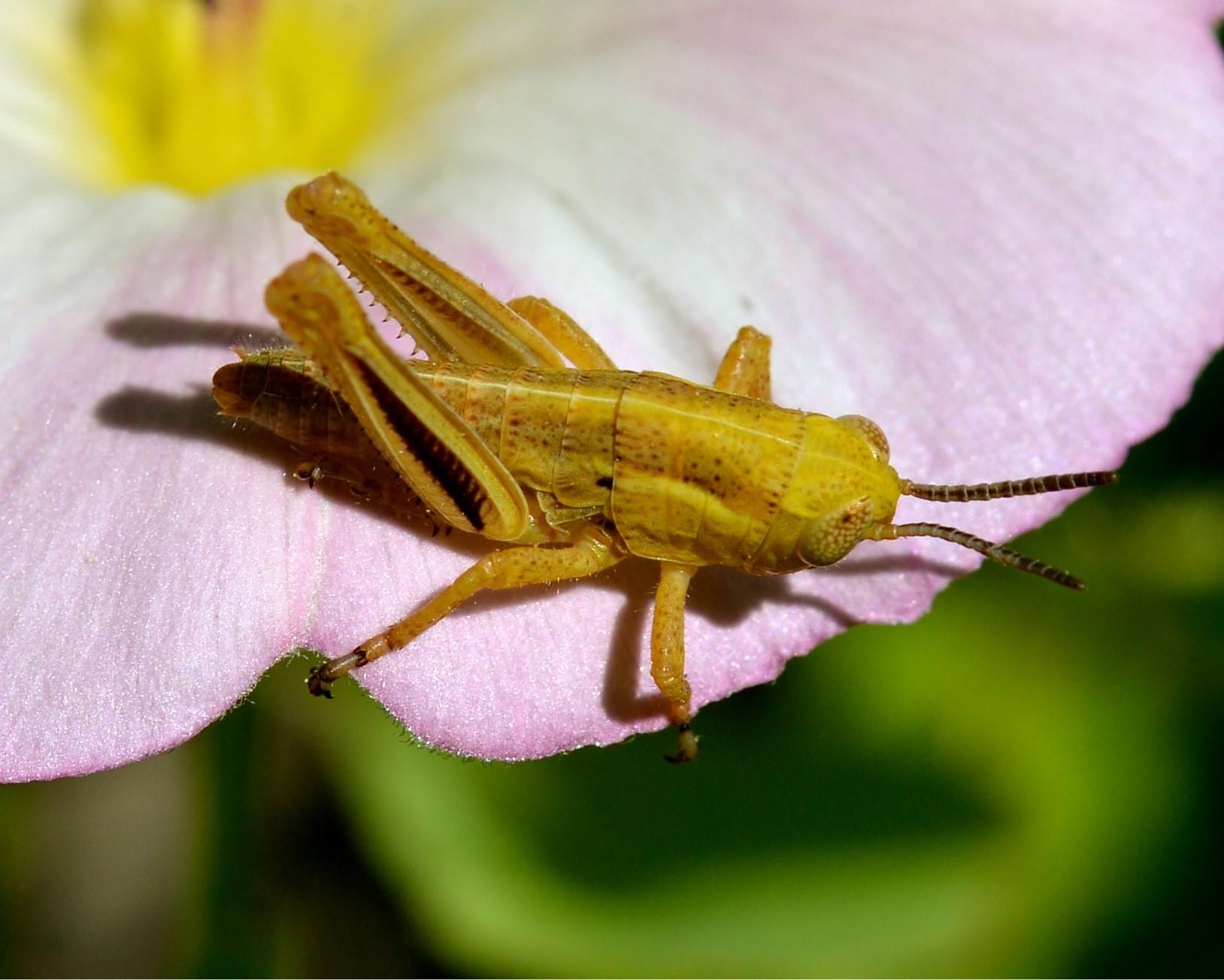 Dave Grasshopper.jpg