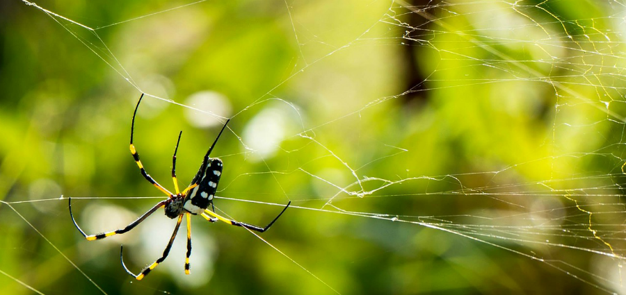 A spider crawling on a web