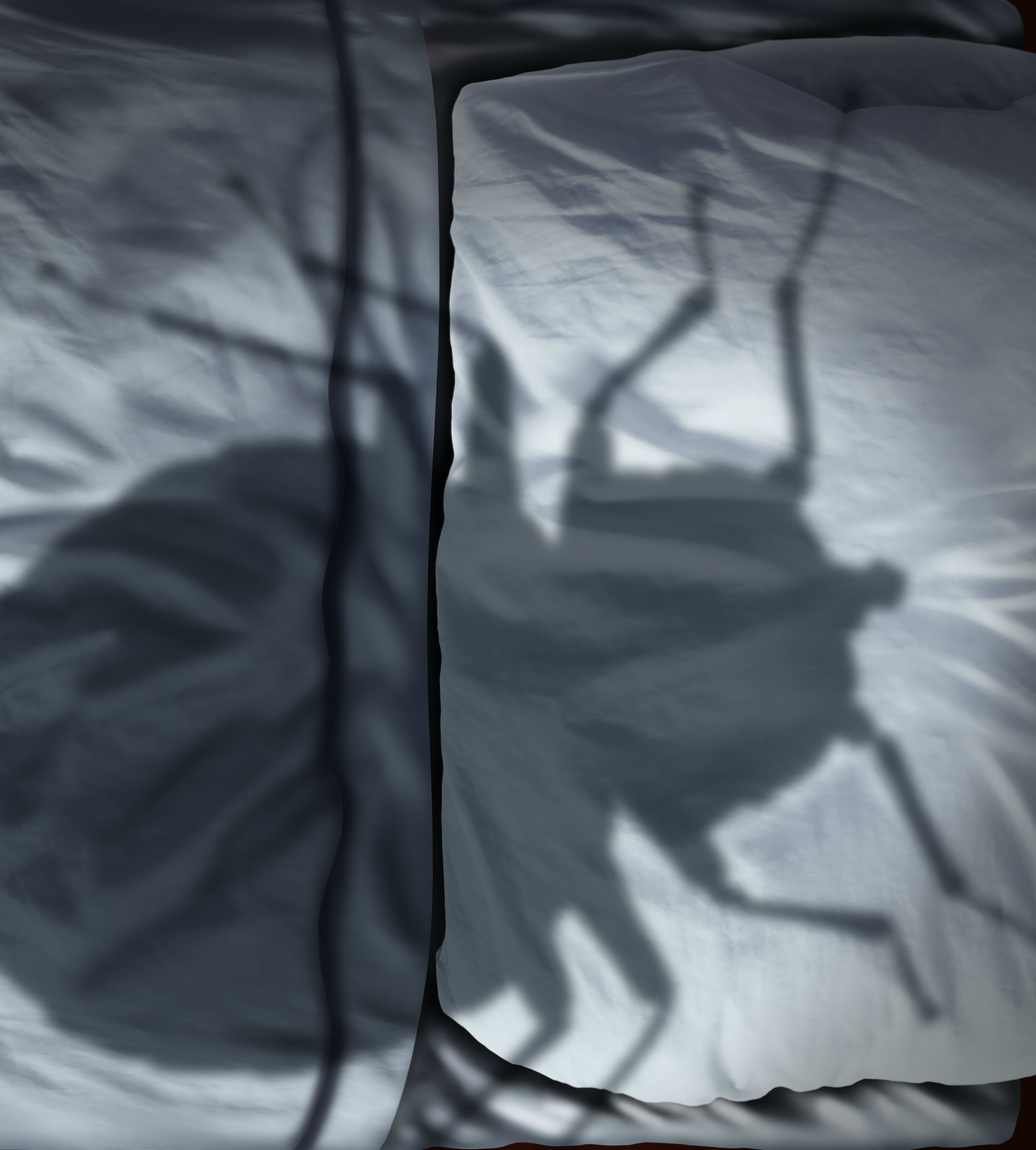 bed-bug on bed